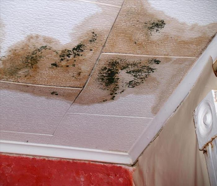 Mold growth on ceiling tile